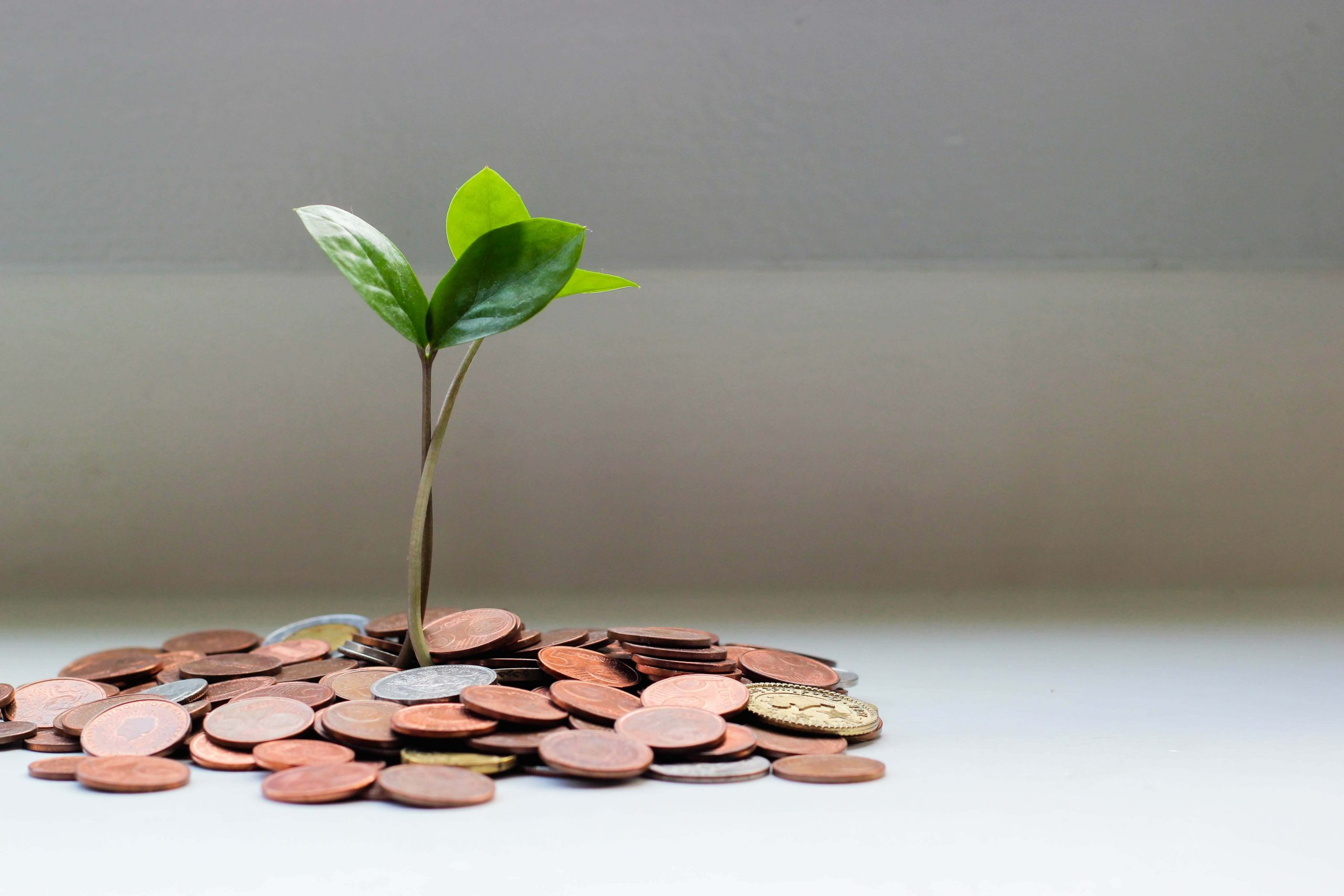 small plant growing out of pile of coins